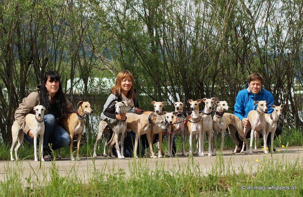 Hunde v.l.n.r.: Channi, Nesola, Buddy, Coco, Kiambi, Micra, Nisha, Latoya, Akai, Khaleesi, Chiron, Naima