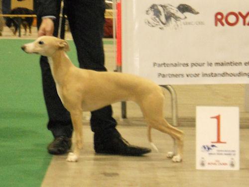 best-puppy-bitch-crbl-2011-courtrai.jpg