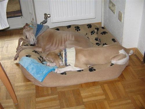 bjknightyhundebettimg_0571.JPG