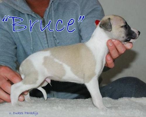 bruce45.jpg