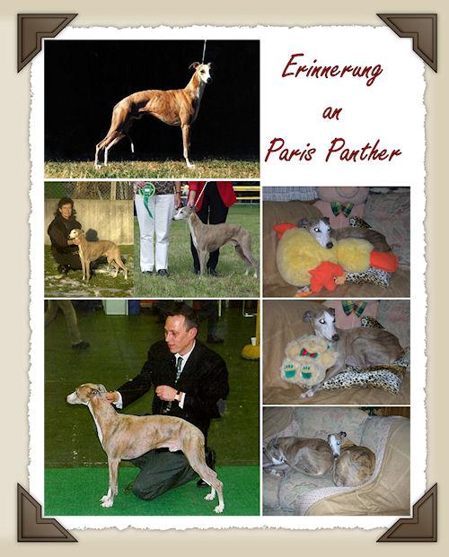erinnerung-paris-panther.jpg
