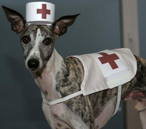 kl-pluto-krankenbruder.jpg