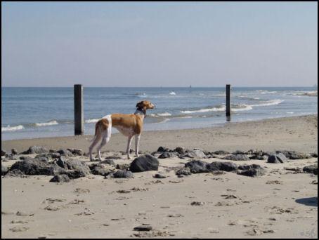 sandstrand1.jpg