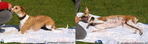 tricknishatoterhund.jpg