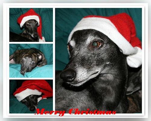 weihnachten-2008_hf.jpg