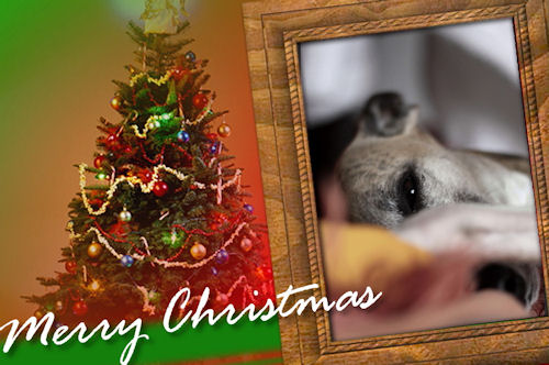 weihnachten-montywiwi.jpg