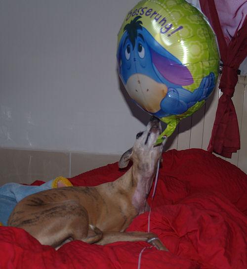 wl-gute-besserungsballon.jpg
