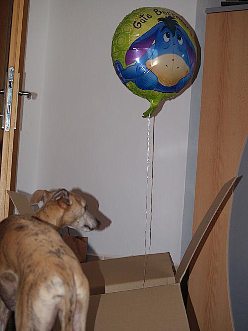 wl-gute-besserungsballon3.jpg